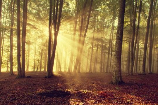 住友林業の年収水準は業界最高って知ってた?【社員から聞きました】の画像